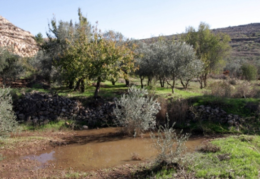 Settler_Violence_dec-4-2012-settlers-dump-wastewater-illegal-settlement-27_12_16_4_12_20121