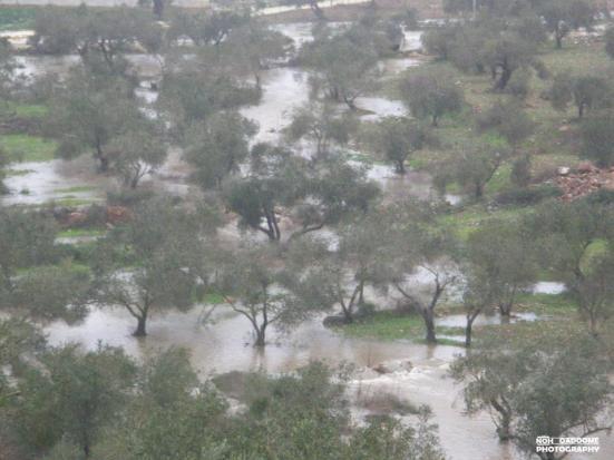jan-8-2013-floods-in-west-bank-photo-via-paldf-5