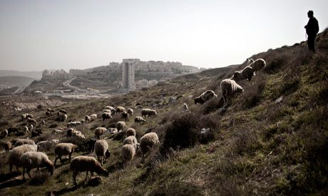 a-palestinian-shepherd-wa-006