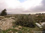 Beit Ommar weekly demonstration_March_1_2013_04